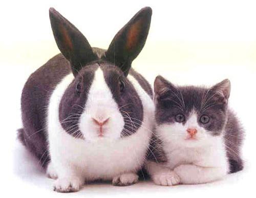 欠扁的兔子