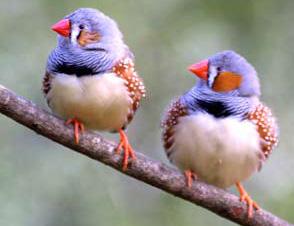 我是一隻鳥…