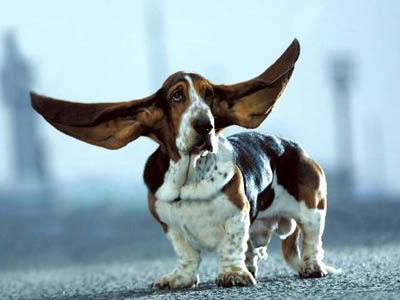 耳朵不見了!