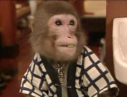 動物園的猴子!